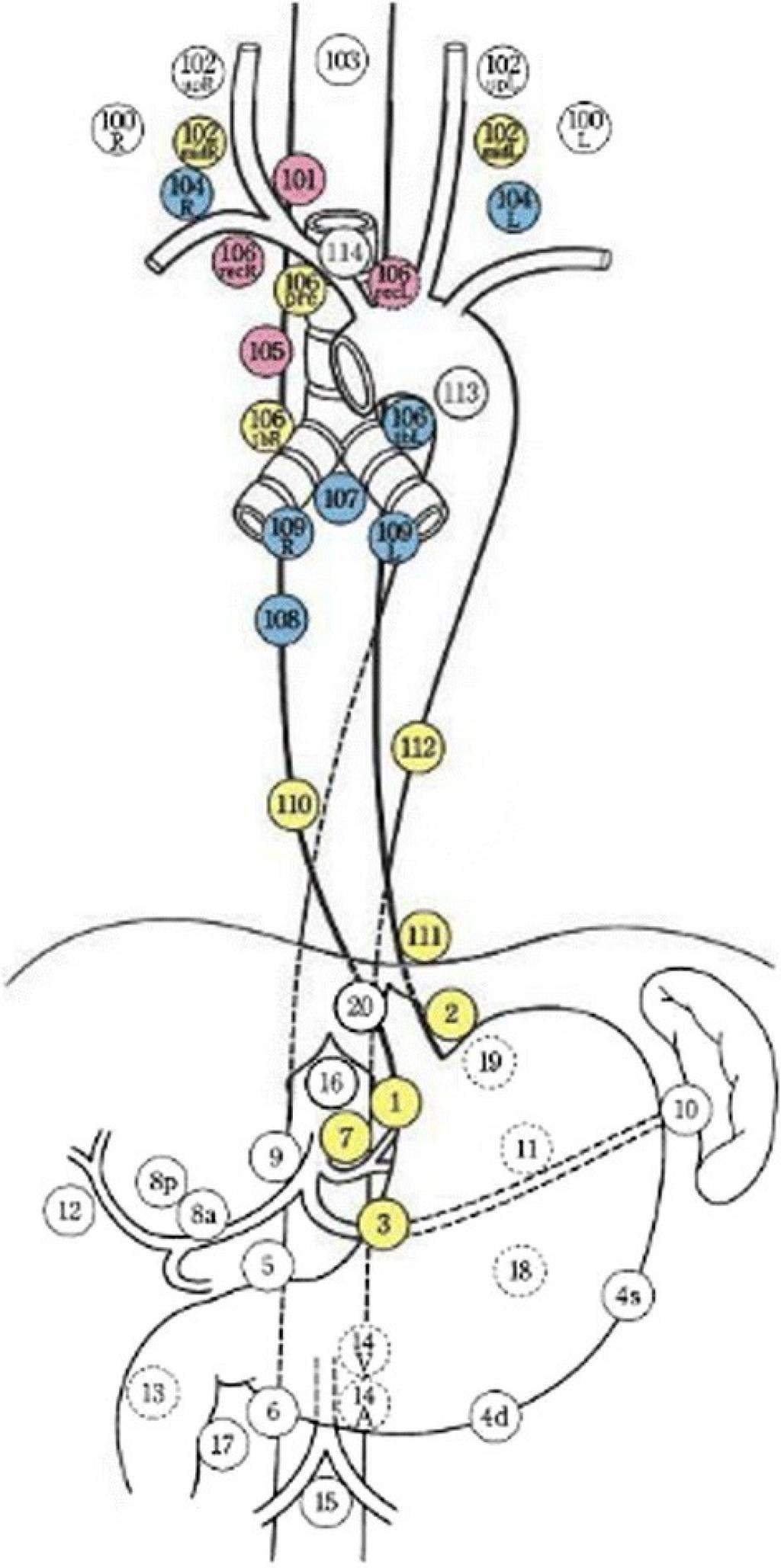 Топография лимфатических узлов желудочно-кишечного тракта по японской классификации JSED